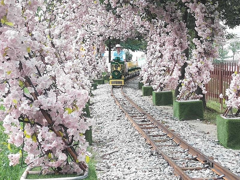 网红观光小火车